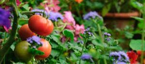 Vegetable Garden 2.png