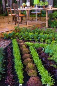 Vegetable Garden 3.png